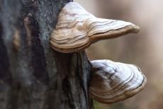 함백산 야생화 영농조합법인